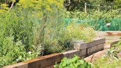 Small organic vegetable garden in urban area. Stock Footage