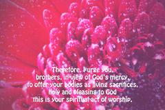 Inspirational verse from the bible on a blurred background Stock Illustration