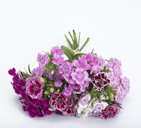 Carnation bouquet Stock Photos