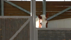 Spotted horse peeping from behind a fence - stock footage