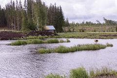 Freshwater pond at a water treatment wetland in Finland Stock Photos
