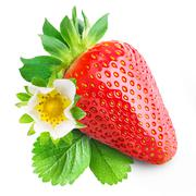 One strawberry with leaves and flower isolated Stock Photos