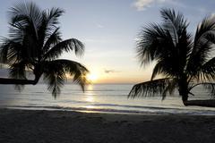Palm tree in sunset, Kho Kood Thailand Stock Photos