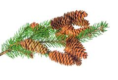 beautiful Christmas decoration of fir tree branch with cone is isolated on wh - stock photo