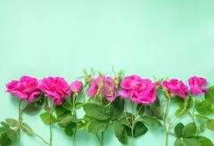 flat lay of beautiful romantic pink rose flowers with buds and leaves on gree - stock photo
