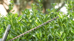 slow motion trimming hedges with a trimmer - stock footage