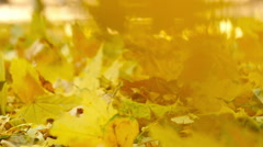 woman hand holds for fallen yellow leaves in autumn park, slow motion 3 - stock footage