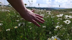 Woman in a field of daisies touched by hand - stock footage