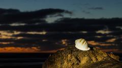 Snail Sea Shell - stock photo