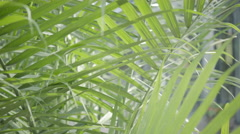 Green fern close-up in the wind peacefull ecology Stock Footage