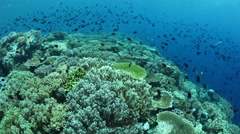 Healthy Coral Reef in Wakatobi National Park Stock Footage