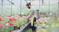 4K Worker in garden center greenhouse watering rows of plants Stock Footage