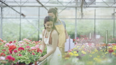4K Portrait smiling workers in garden center greenhouse Stock Footage