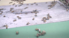 Bee houses in apiary Stock Footage