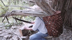 Ecuadorian peasant cuts a sugar cane Stock Footage