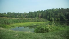 Calm swampy river in forest, summer daytime meadow. Stock Footage