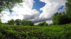 Green Bushes And Trees Under A Blue Sky Stock Footage