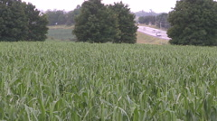 Corn crop damaged and destroyed by hail storm on farm - stock footage