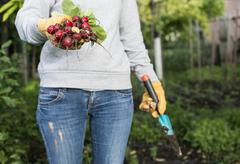 Woman hold bunch of radishes Stock Photos