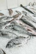 Raw sea bream fish on ice Stock Photos