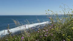 Wild flowers and herbs with the ocean in background Stock Footage