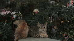 Stray Cats sitting on the wall Stock Footage