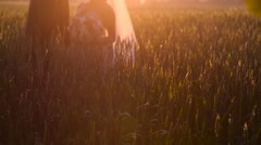 Newlyweds hugging in a wheat field in sunny day Stock Footage