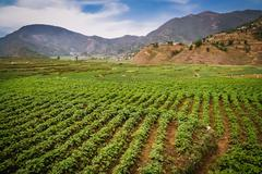 Nepali agriculture Stock Photos