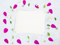 Cosmos pink flowers - stock photo