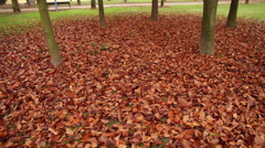 Fallen Autumn Leaves Wet with Rain Stock Footage