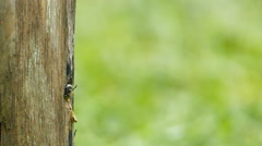 Carpenter bee in the nature. Stock Footage