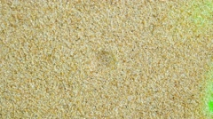 Sand on a Green Screen Stock Footage