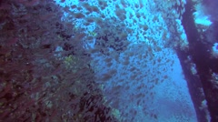 Male scuba diver inside the wreck of the SS Carnatic with a school of glassfish Stock Footage