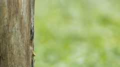 Carpenter bee in nature. Stock Footage