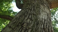 Flight Along a Trunk of an Old Big Tree Stock Footage