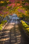autumnal alley, very soft focus - stock photo