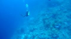 Female scuba diver with a coral reef Stock Footage