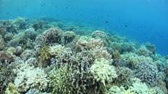 Beautiful Coral Reef in Wakatobi National Park Stock Footage