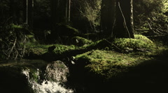 Moss on forest floor with stream - stock footage