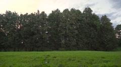 Brunette girl walking cross the frame on evening meadow Slow motion wide shot Stock Footage