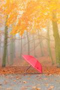 Red umbrella in autumn park on leaves carpet. - stock photo