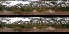 360VR stereoscopic 360° Australian rainforest environment virtual reality - stock footage