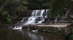 Close view of liffey falls in tasmania Stock Footage