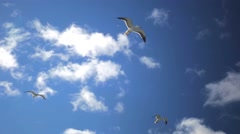 Gulls in blue sky flying above the tourists and motor ship. Stock Footage