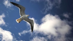 Gull is flying above the camera. Sailing to the Solovetskie islands. Stock Footage