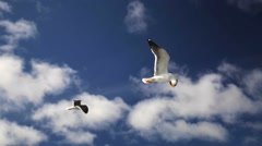 Gulls are flying above the camera. Sailing to the Solovetskie islands. Stock Footage