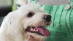 3-Girl Examining Teeth Dental Hygiene Of Pet Dog - stock footage