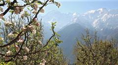 Apple Kailash Snow Peak Spring Stock Footage
