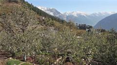 Kalpa Apple Panorama Stock Footage