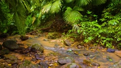 Stream in the wet rainforest. Video 4k with natural sound Stock Footage